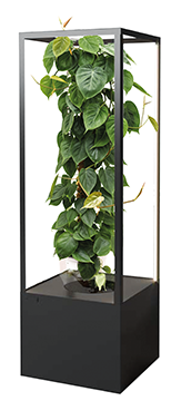 philodendron-mit-cube
